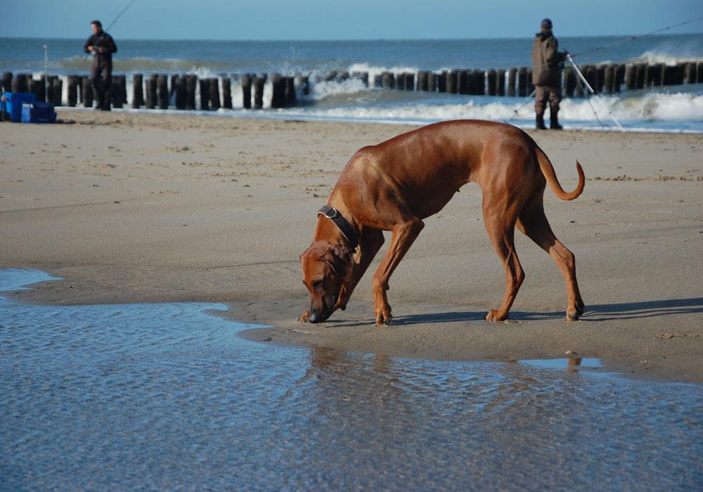 Strandfotos von Sammy