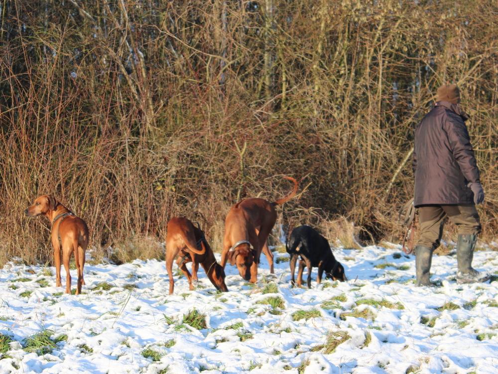Schnee, Sonne und Besuch