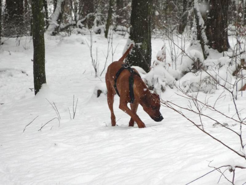 Unser Berliner-Jung im Schnee!