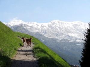 ridgebacks tirol wandern