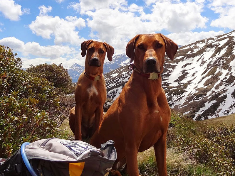 Kyra und Anouk in Tirol