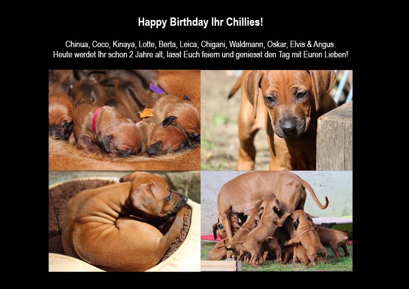 Zweiter Geburtstag Chillies