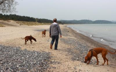 Kurzurlaub mit den Hunden