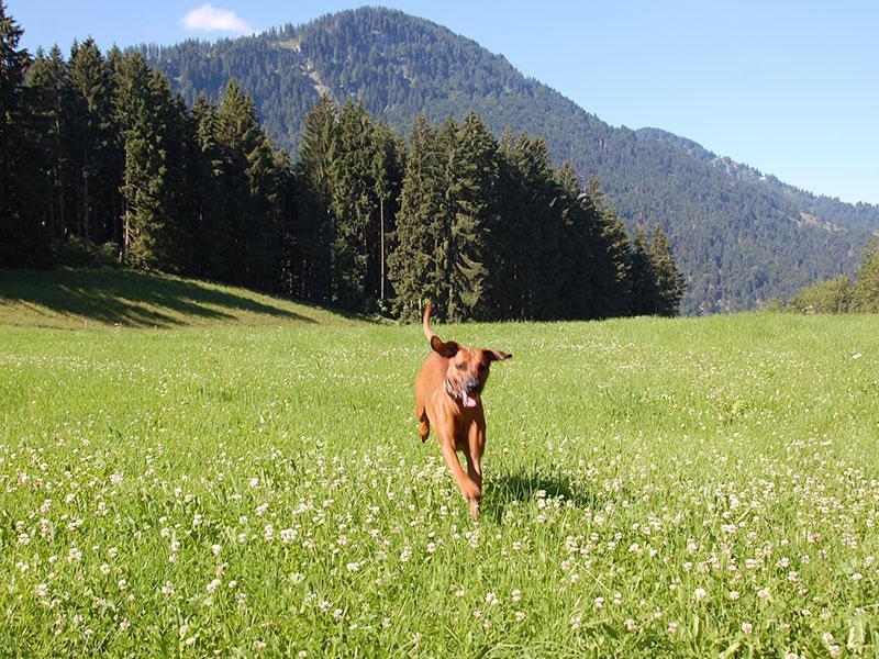 ridgeback wandern Allgäu