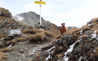 Ridgebacks in Tirol