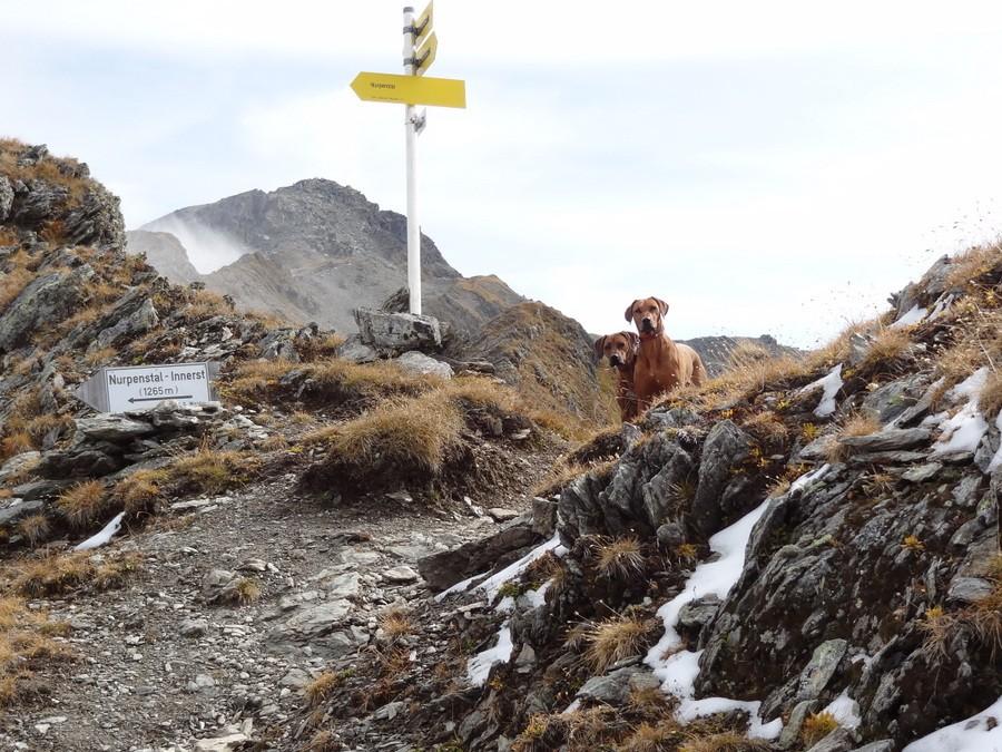 Ridgebacks in Tirol