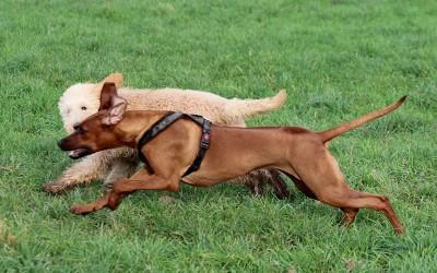 Hundeschule mit Lotte und Chigani