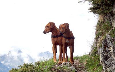 Kyra und Anouk waren wieder in Tirol