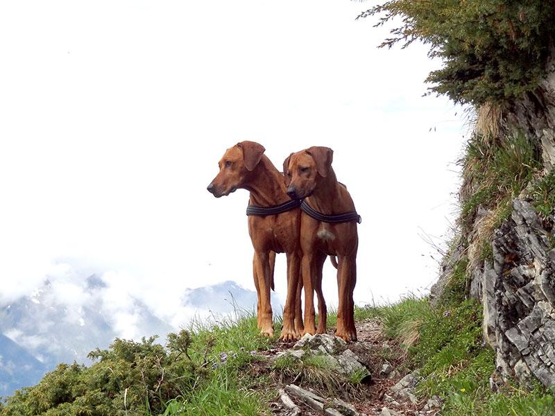 ridgeback tirol berge