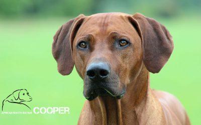 Cooper erfolgreich in Karlsruhe und Kassel