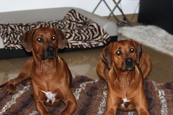 Cooper und Amera