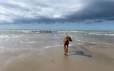 Ida am Meer