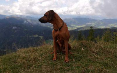 Bergtour in Österreich mit Hund