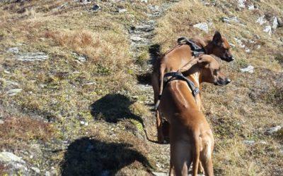 Bergtour mit Kyra und Dunya
