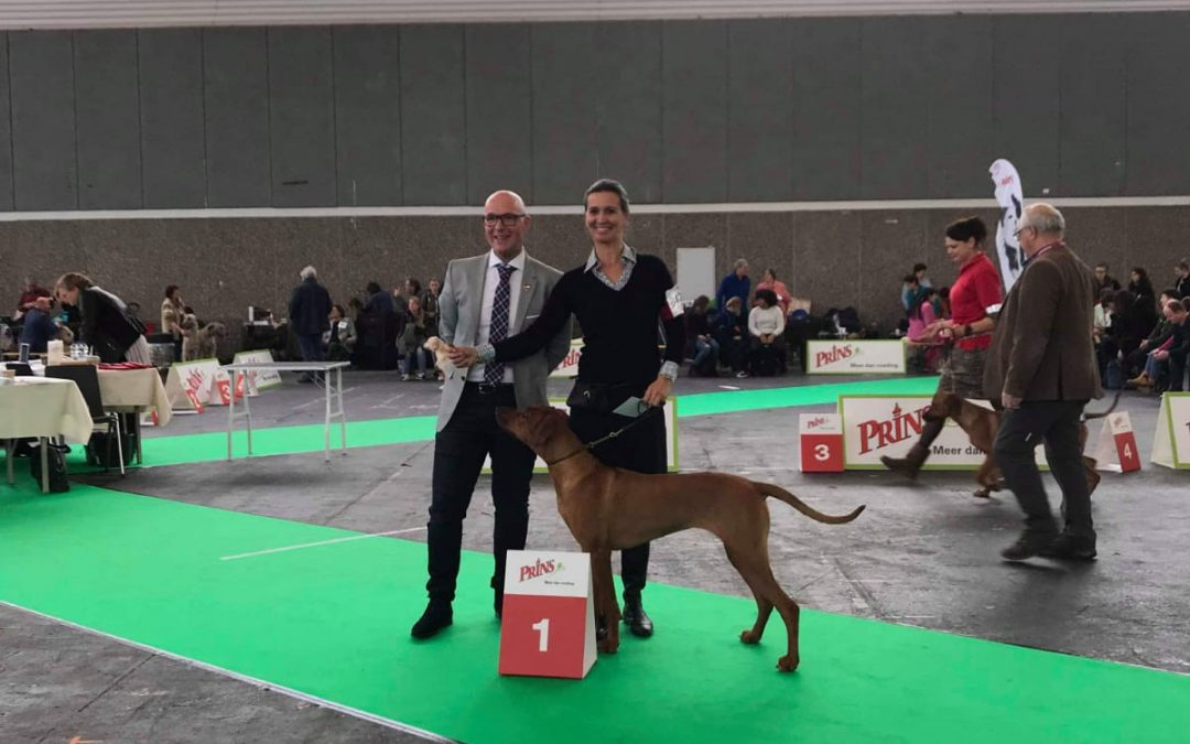 Holland Cup Amsterdam Winner Ridgeback