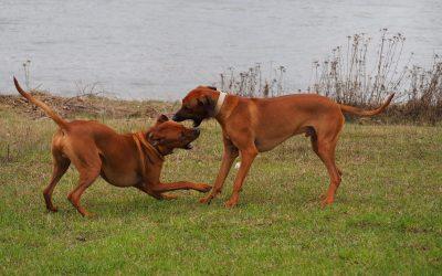 Amari & Jasper zwei tolle Brüder