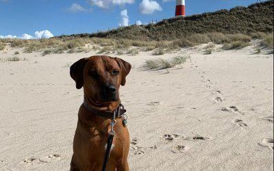 Oskar macht Urlaub