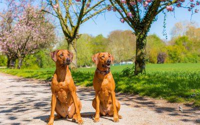 Panya & Berta am Rhein