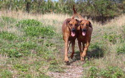 Spaziergang mit Bertas Nachwuchs