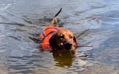 Ridgeback auf See – Zita schwimmt